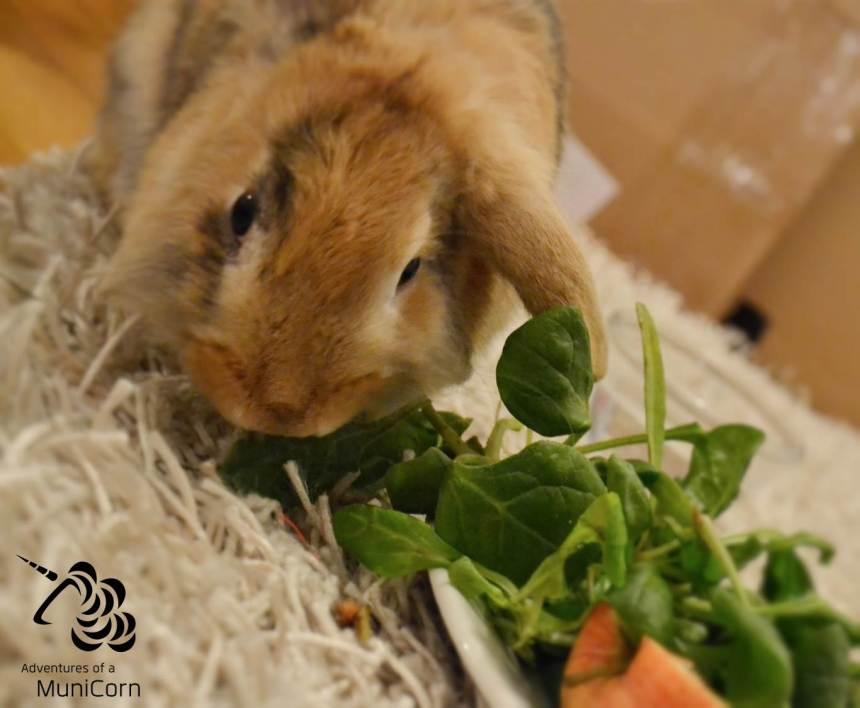 Vegetarier und Spaß dabei: Kaninchen August steht auch auf Spinat