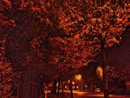 rainy evening in fall