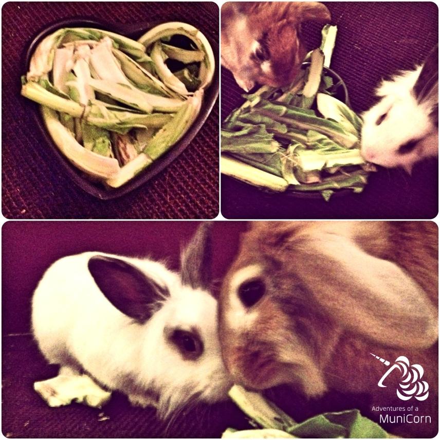 valentine's bunny
