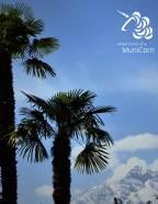 palmen und schnee in südtirol