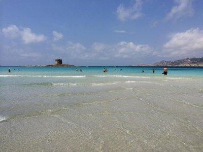 Blick auf die Insel Asinara