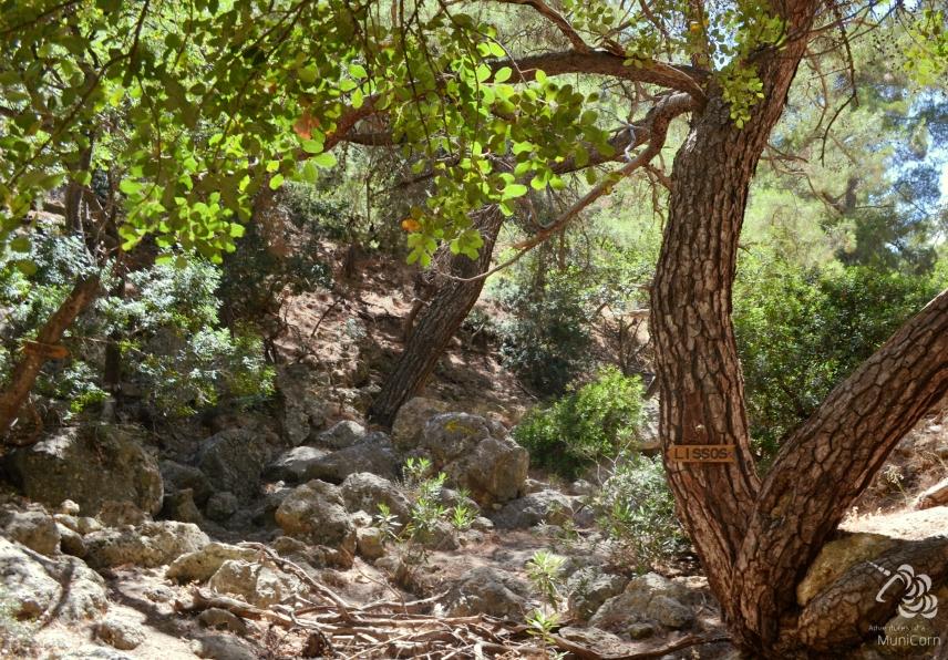 path to lissos crete