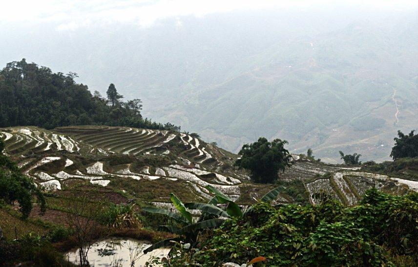 ricefields around Sa Pa in Vietnam