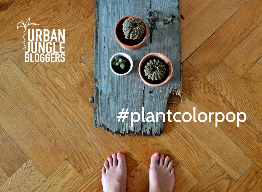 urbanjunglebloggers_colorpop