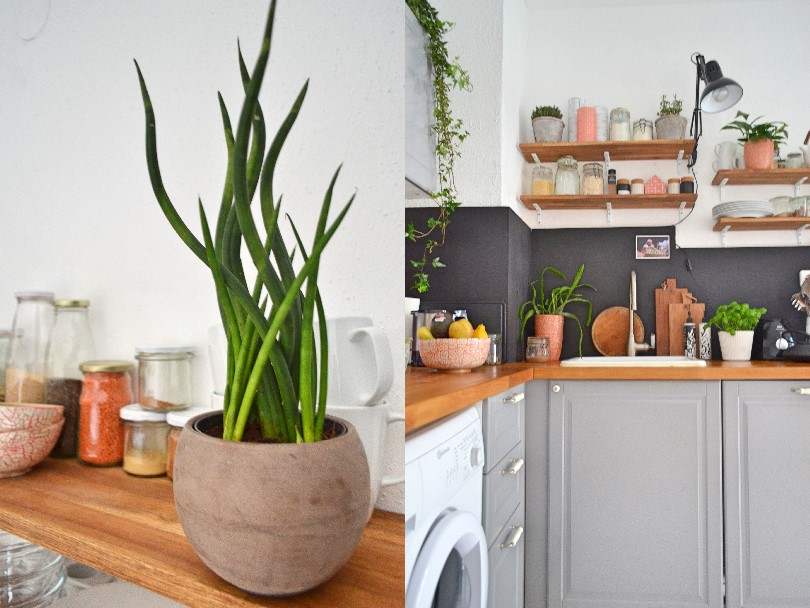 plants kitchen shelfie
