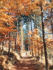 3_Forstweg_Fischbachau_im_Herbst